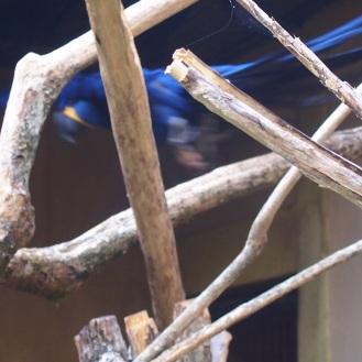Blue! The bird from Rio